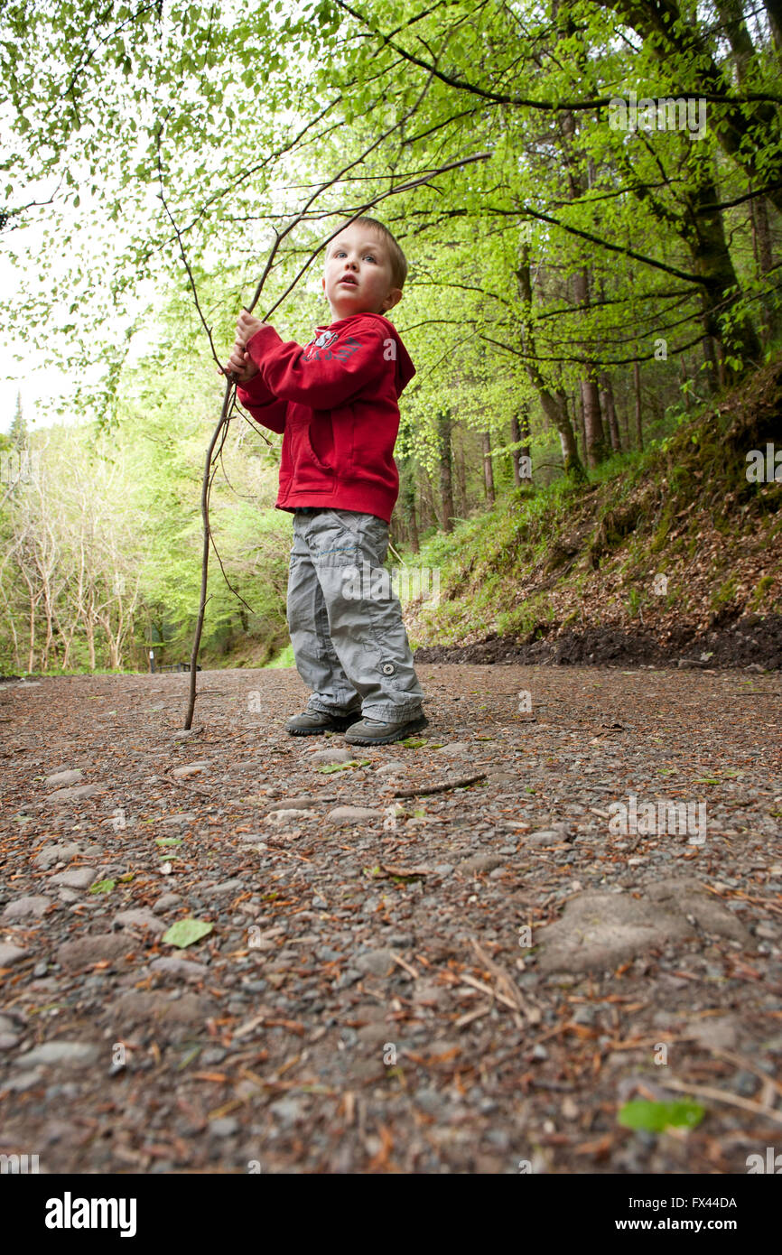 A young boy exploring and playing with a branch in Colligan Woods in County Waterford - Stock Image