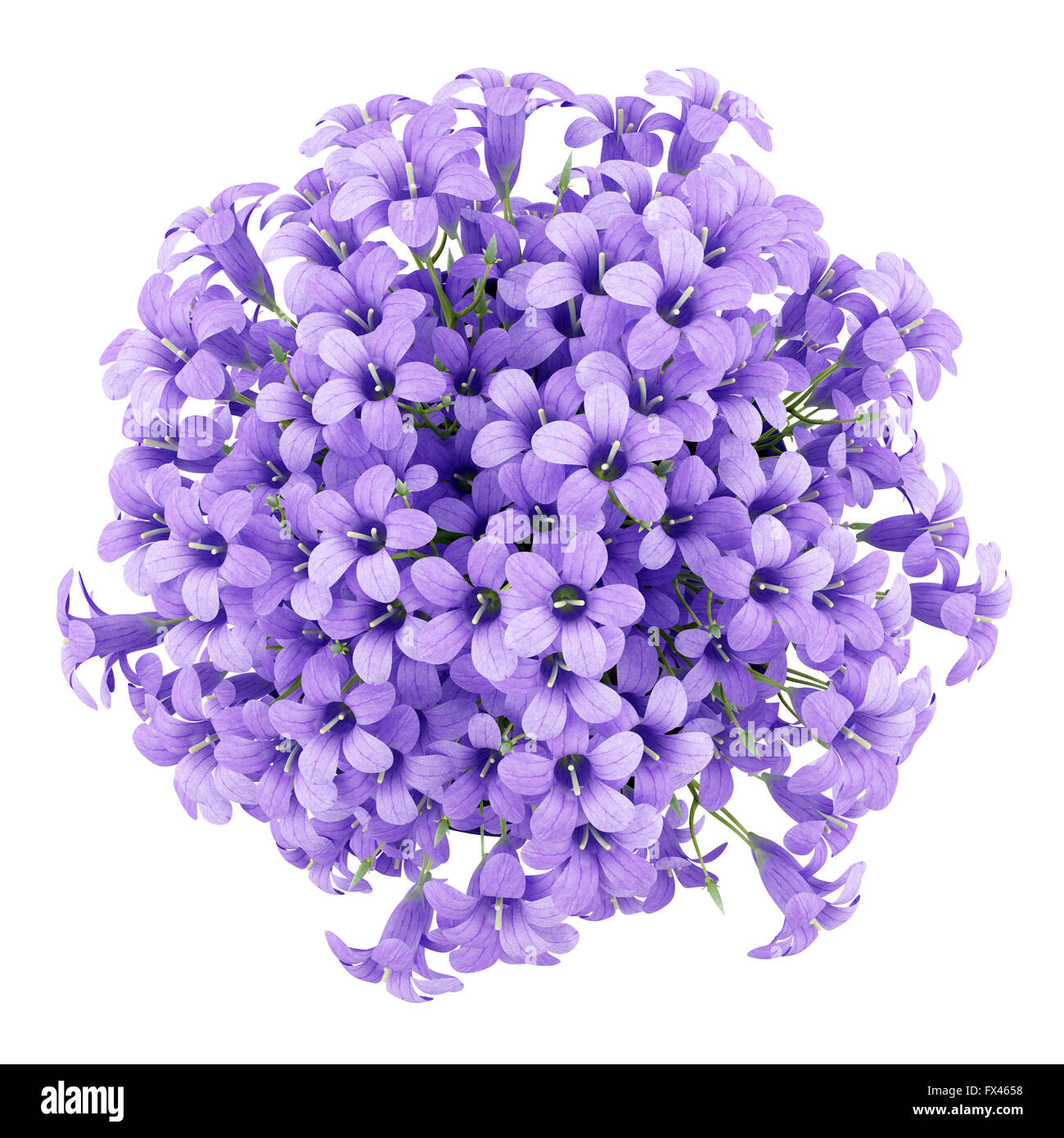 Top view of purple flowers in pot isolated on white background 3d top view of purple flowers in pot isolated on white background 3d illustration mightylinksfo