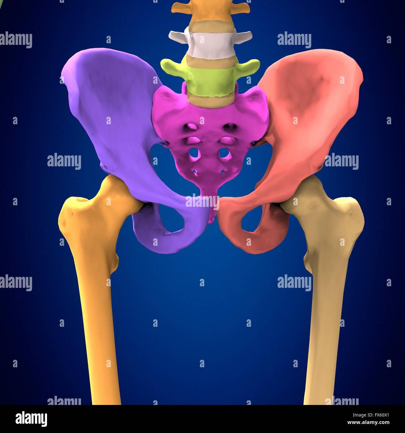 human body hips - Stock Image