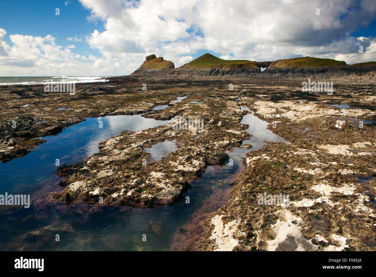 Low tide rock pool at Worm's Head, Gower peninsula, Wales - Stock Image