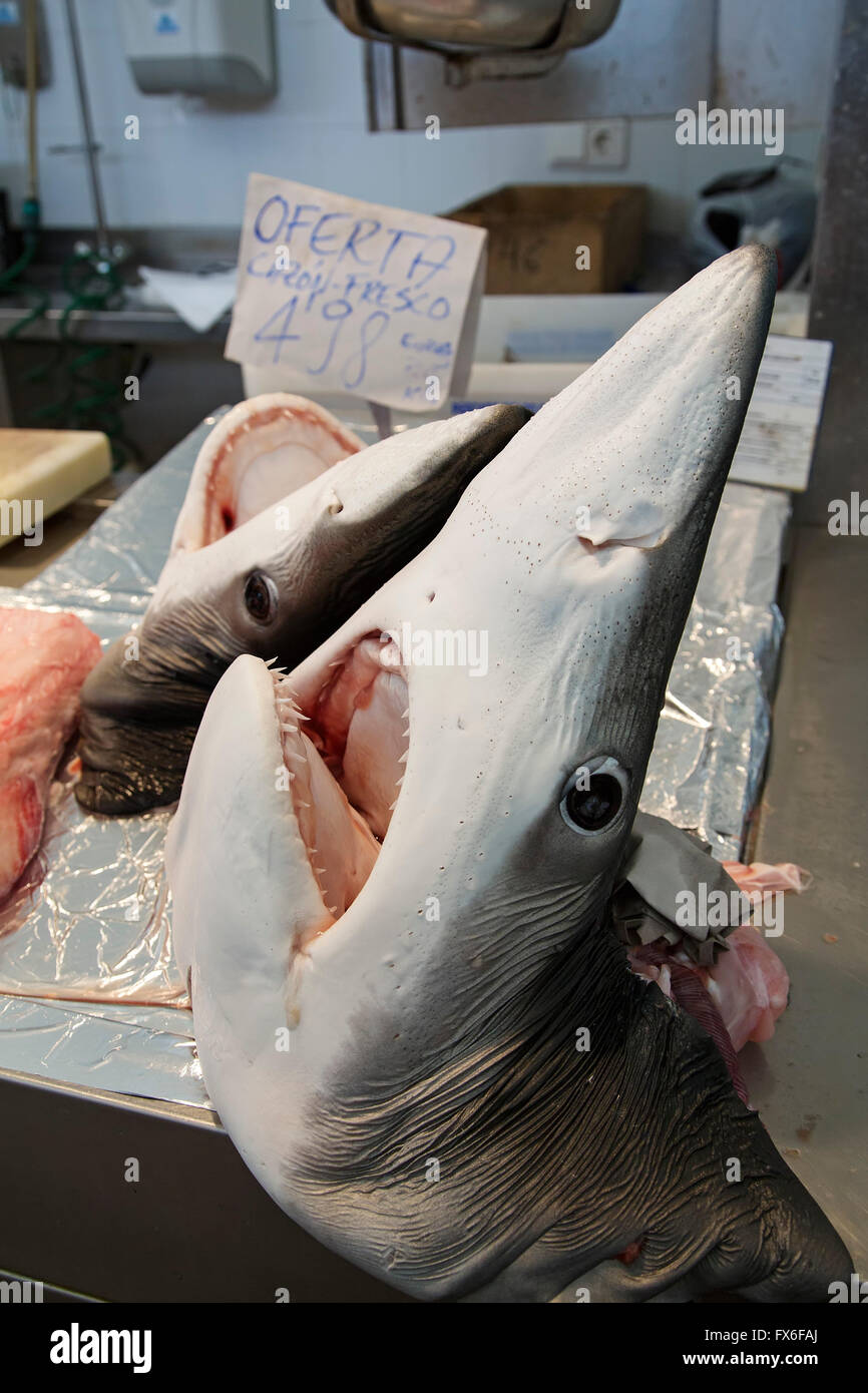 Dogfish head, Central Fish Market. Cadiz City, Andalusia Spain. Europe - Stock Image