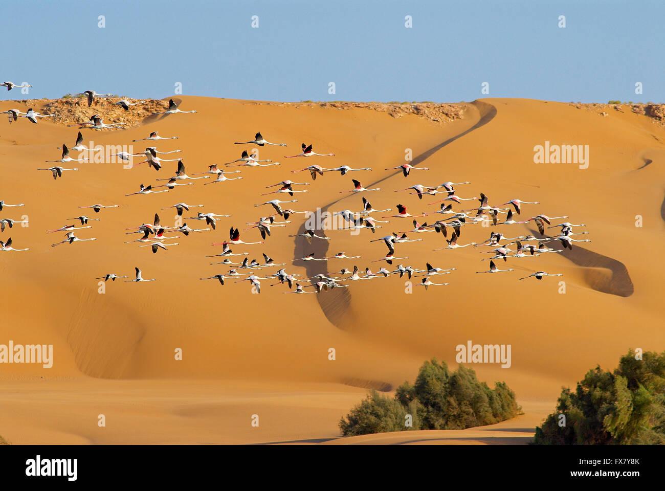 Morocco, Laayoune, Desert, laguna, Former Spanish Sahara - Stock Image