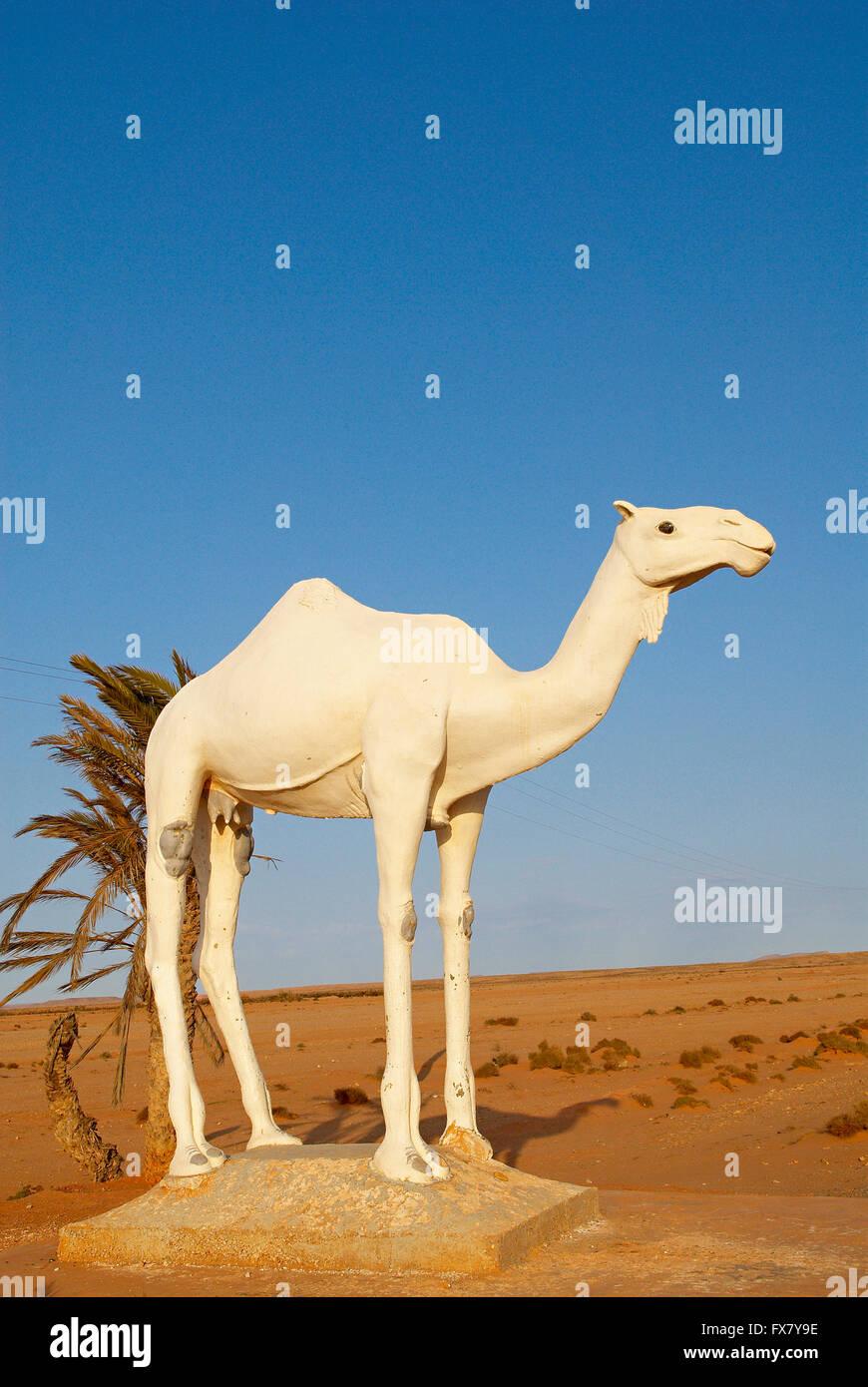Morocco, Road to Smara. Former Spanish Sahara, dromedary - Stock Image