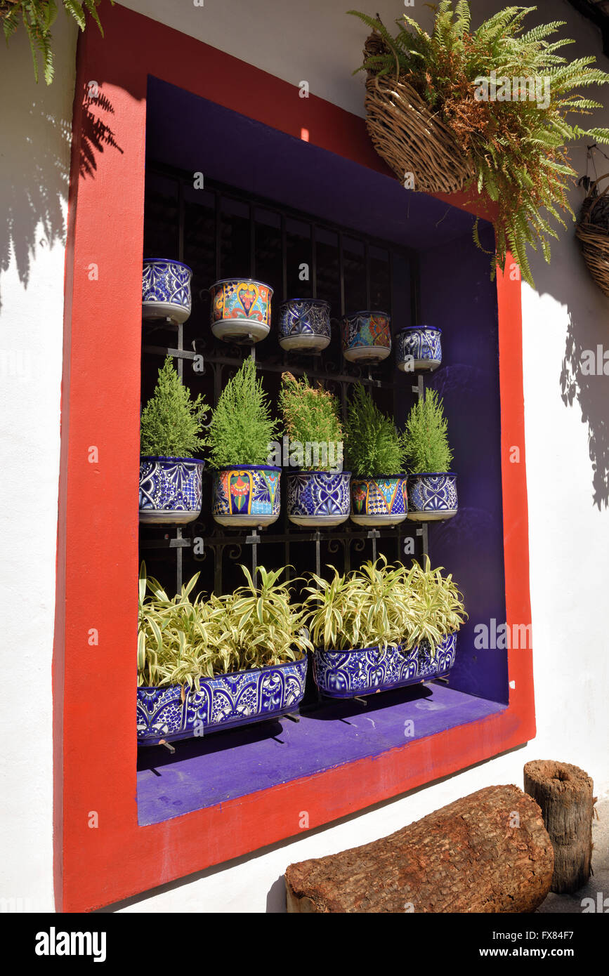 Colorful restaurant window with potted plants in downtown Puerto Vallarta Mexico - Stock Image