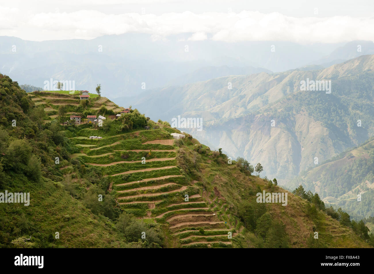 Terrace Fields - Luzon - Philippines - Stock Image
