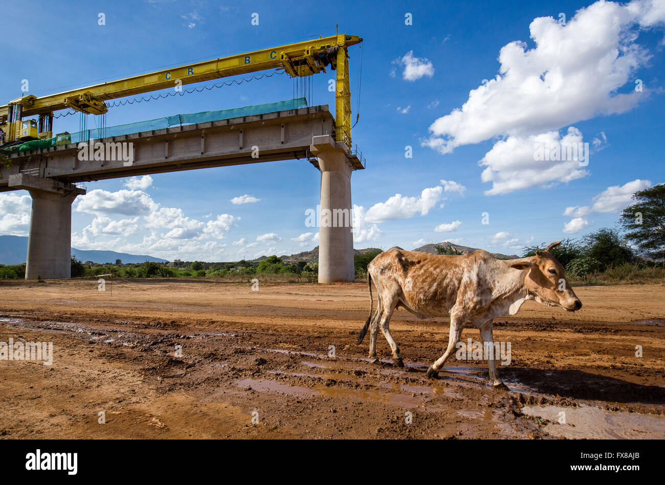 An undernourished Brahman cow walks past the construction site of the Nairobi Mombasa standard gauge railway at - Stock Image