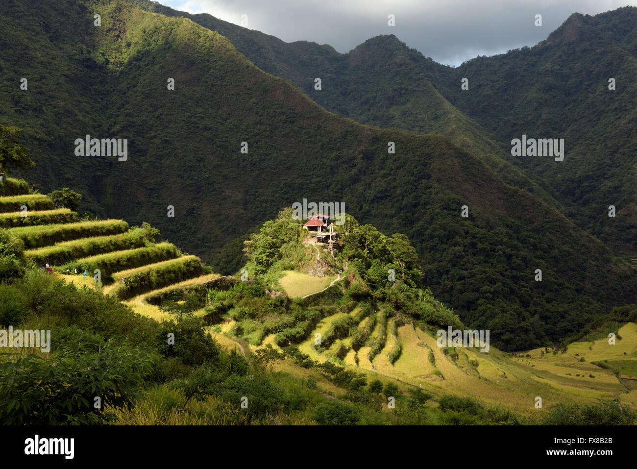 Batad rice terraces in Ifugao, Philippines. - Stock Image