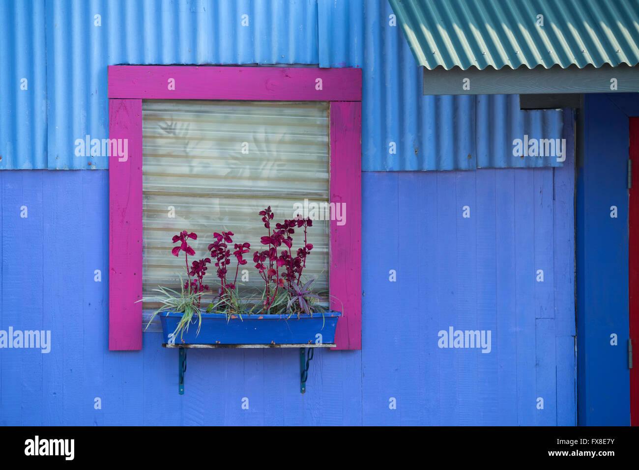 USA, Hawaii, Big Island, Hilo, window with orchids - Stock Image