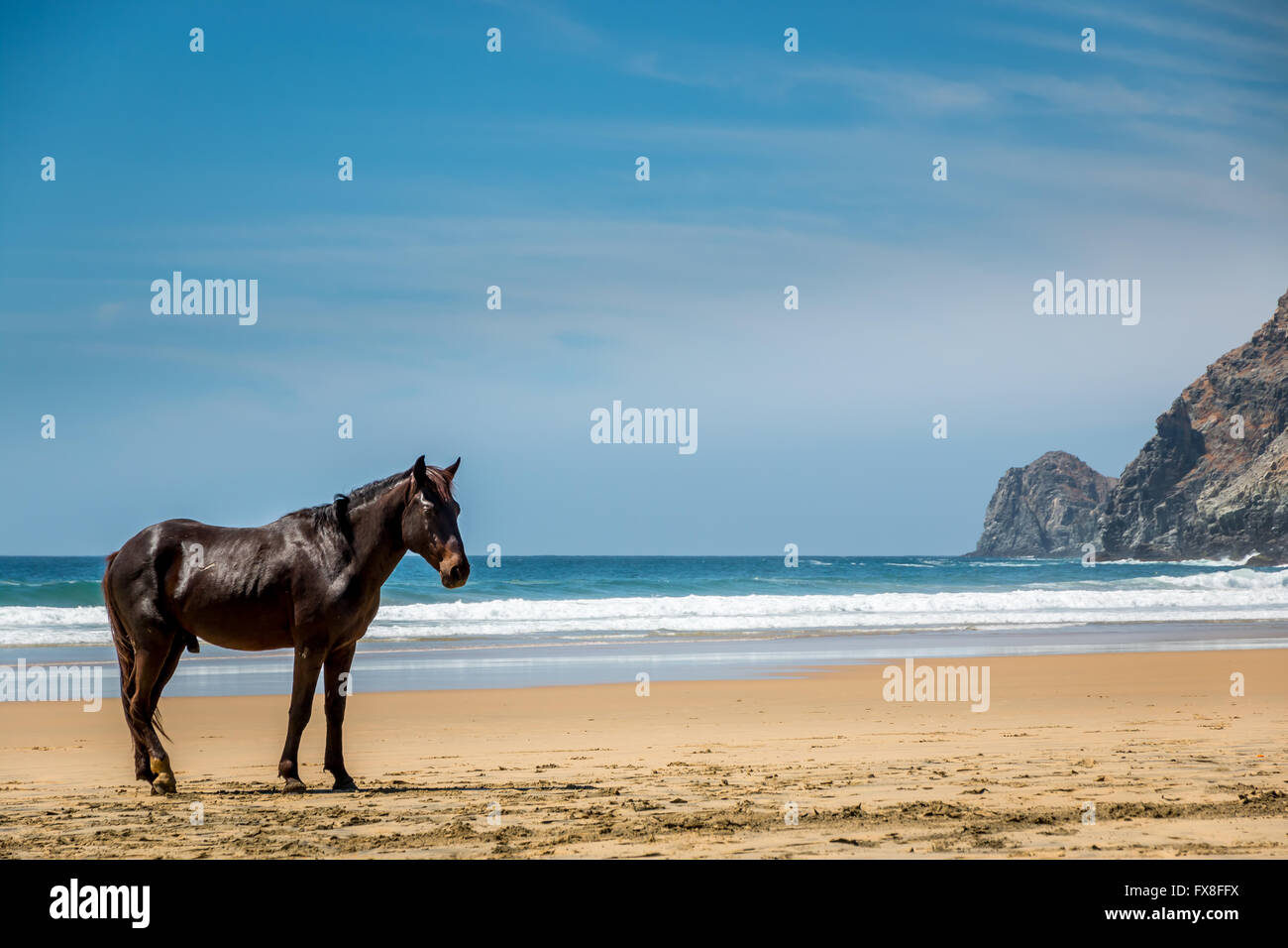 A lone stallion pauses on a remote beach in Baja Mexico. - Stock Image