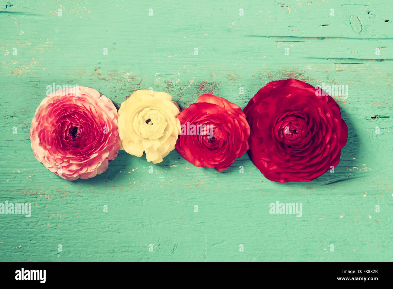 top view of colorful spring flowers on blue wooden background. vintage filtered. - Stock Image