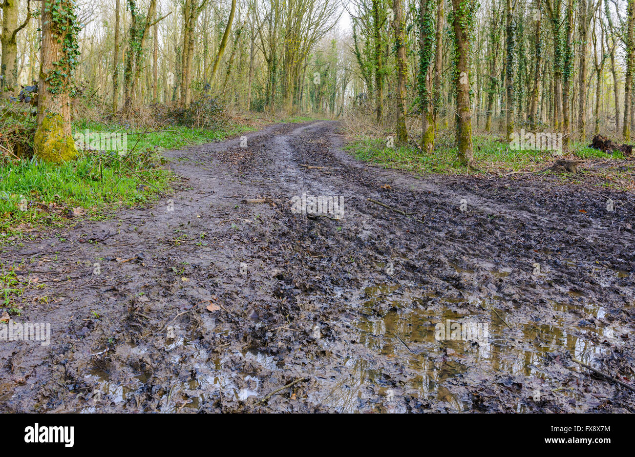 Muddy road with trees in the woods either side, after rainfall. - Stock Image