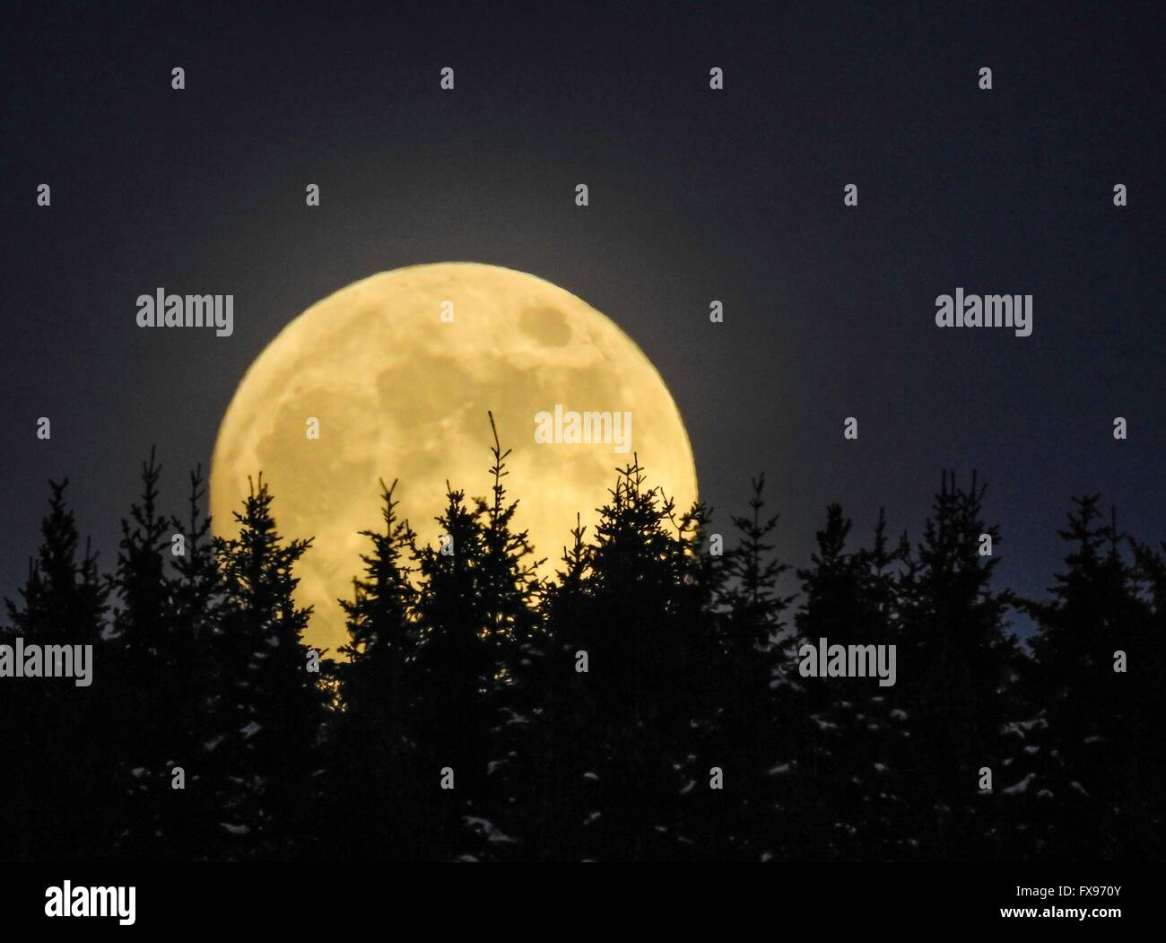 Moonrise Over Forest, March 2016 - Stock Image