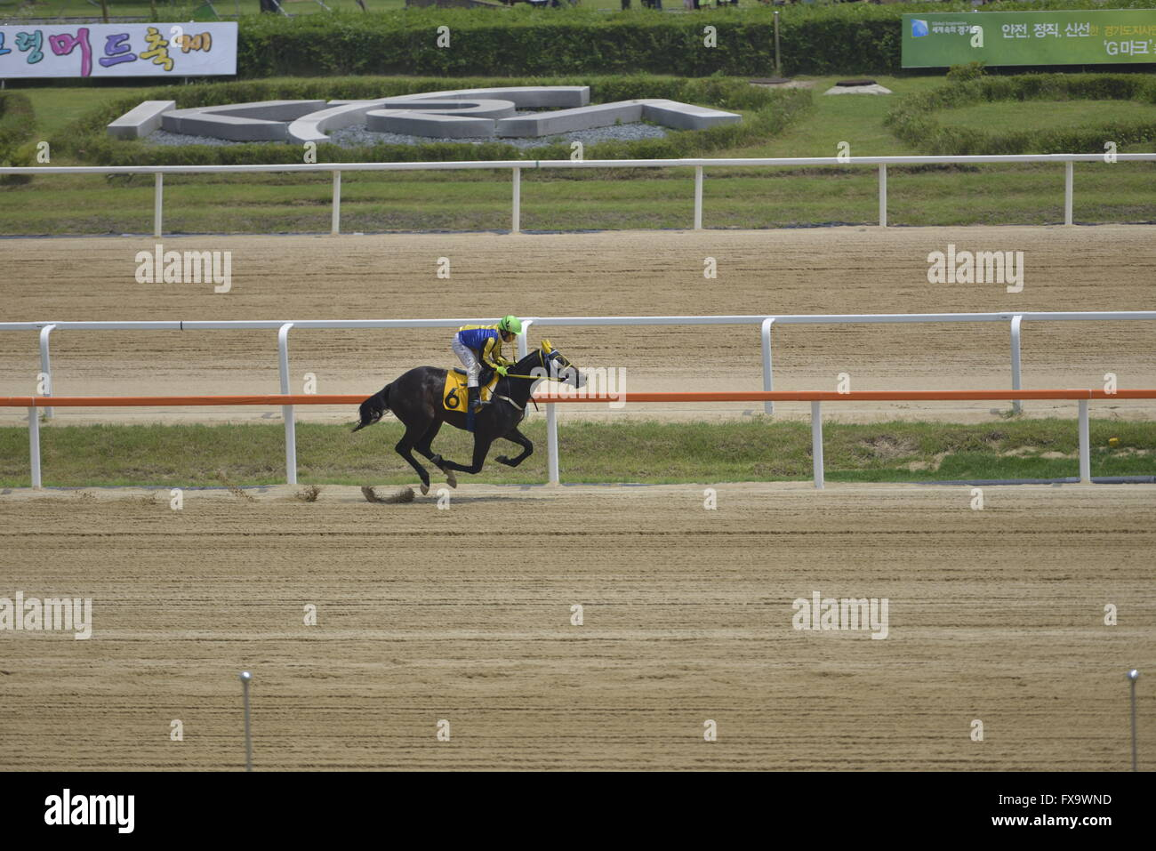 horse racing at a Races in South Korea - Stock Image