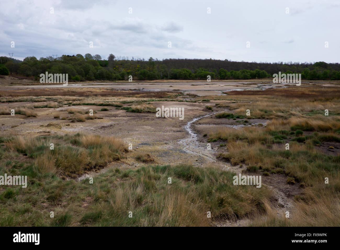 Naturally occuring sulphurous bog in Manziana near Bracciano in lazio, Italy - Stock Image