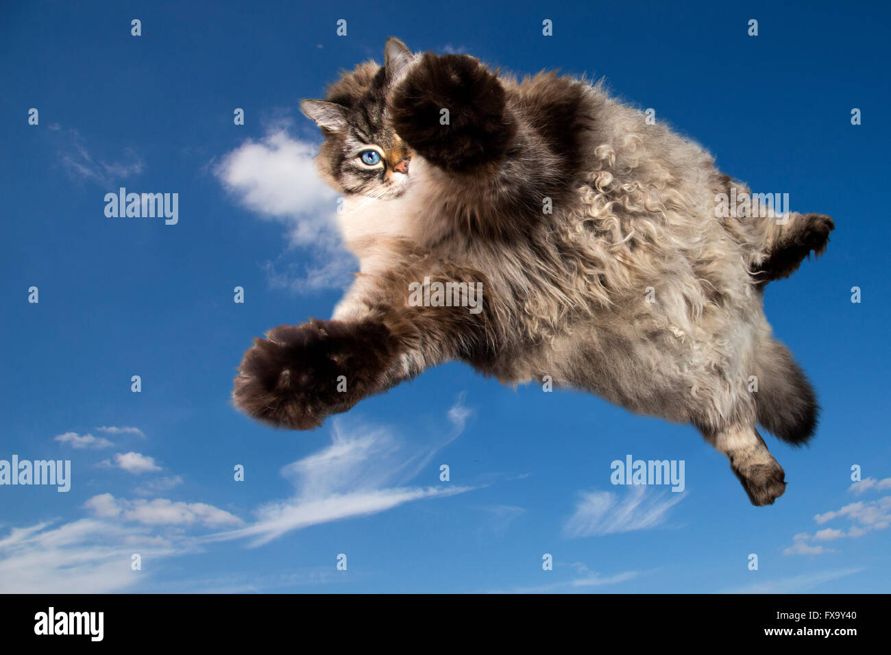 funny cat flying in the sky - Stock Image