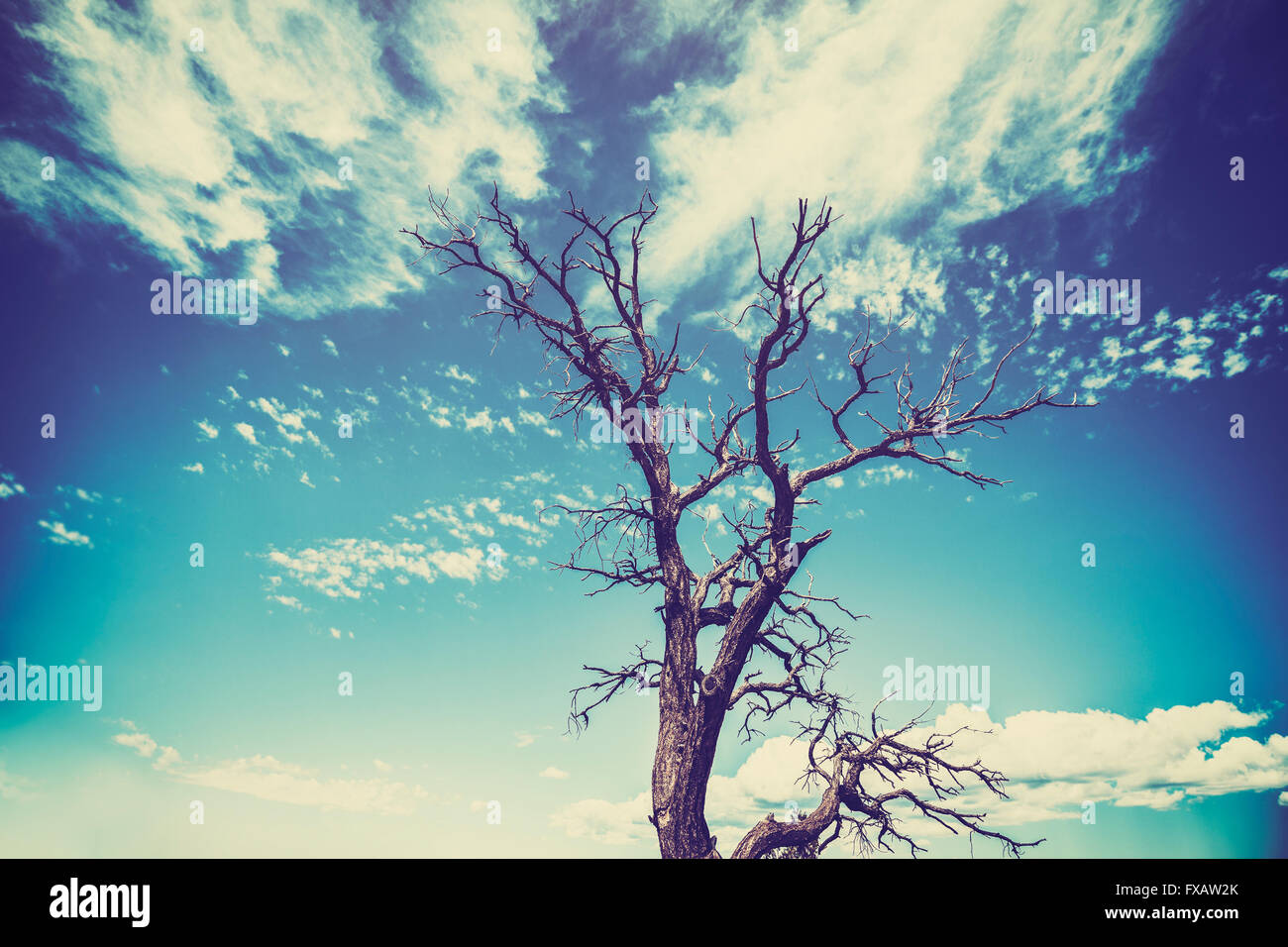 Vintage old film style withered tree with heavy vignette effect. - Stock Image