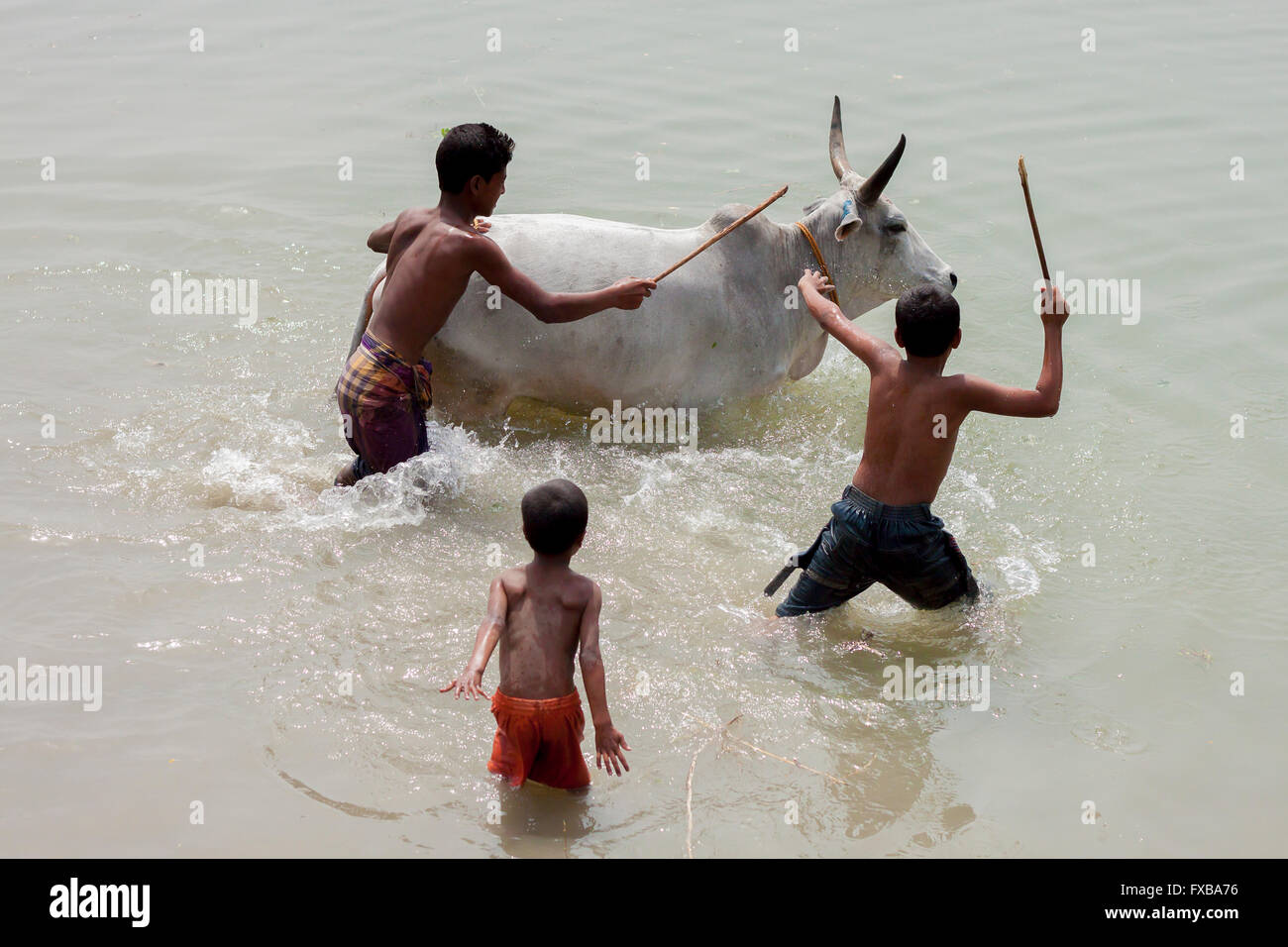 Father and child washing a cow, Dohar, outside of Dhaka, Bangladesh © Jahangir Alam Onuchcha/Alamy - Stock Image