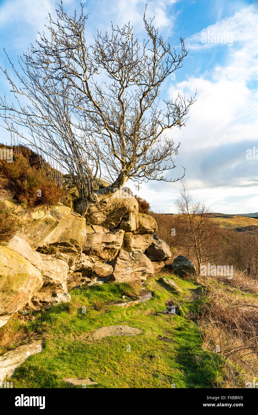 Beatiful view of Northumberland, England from the top of the hill (Corby's Crags) - Stock Image