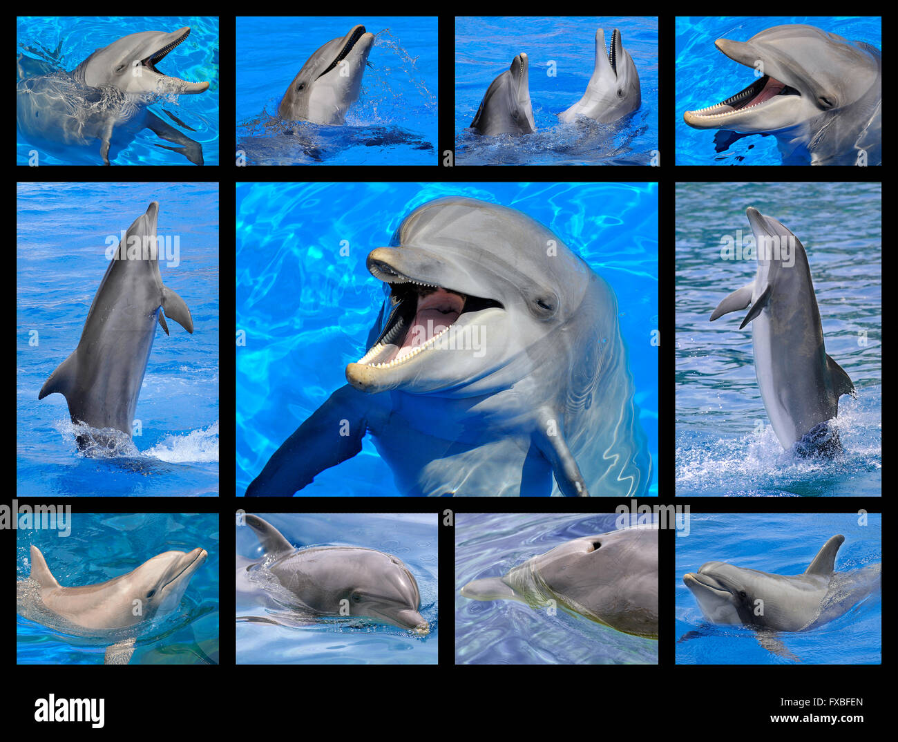 Eleven mosaic photos of  bottlenose dolphin (Tursiops truncatus) in the blue water - Stock Image