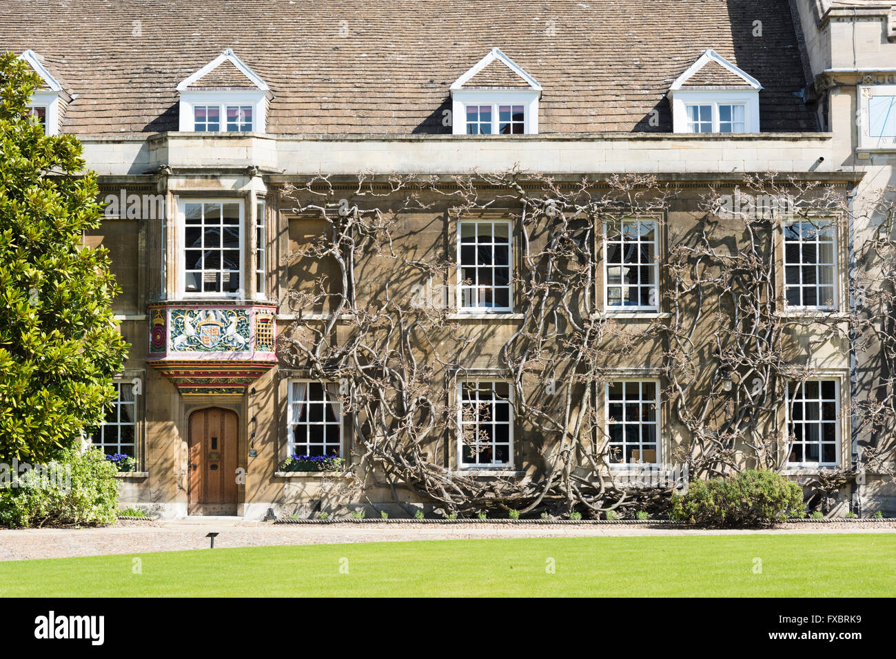 A courtyard and old buildings at Christ's College Cambridge UK part of the University of Cambridge - Stock Image