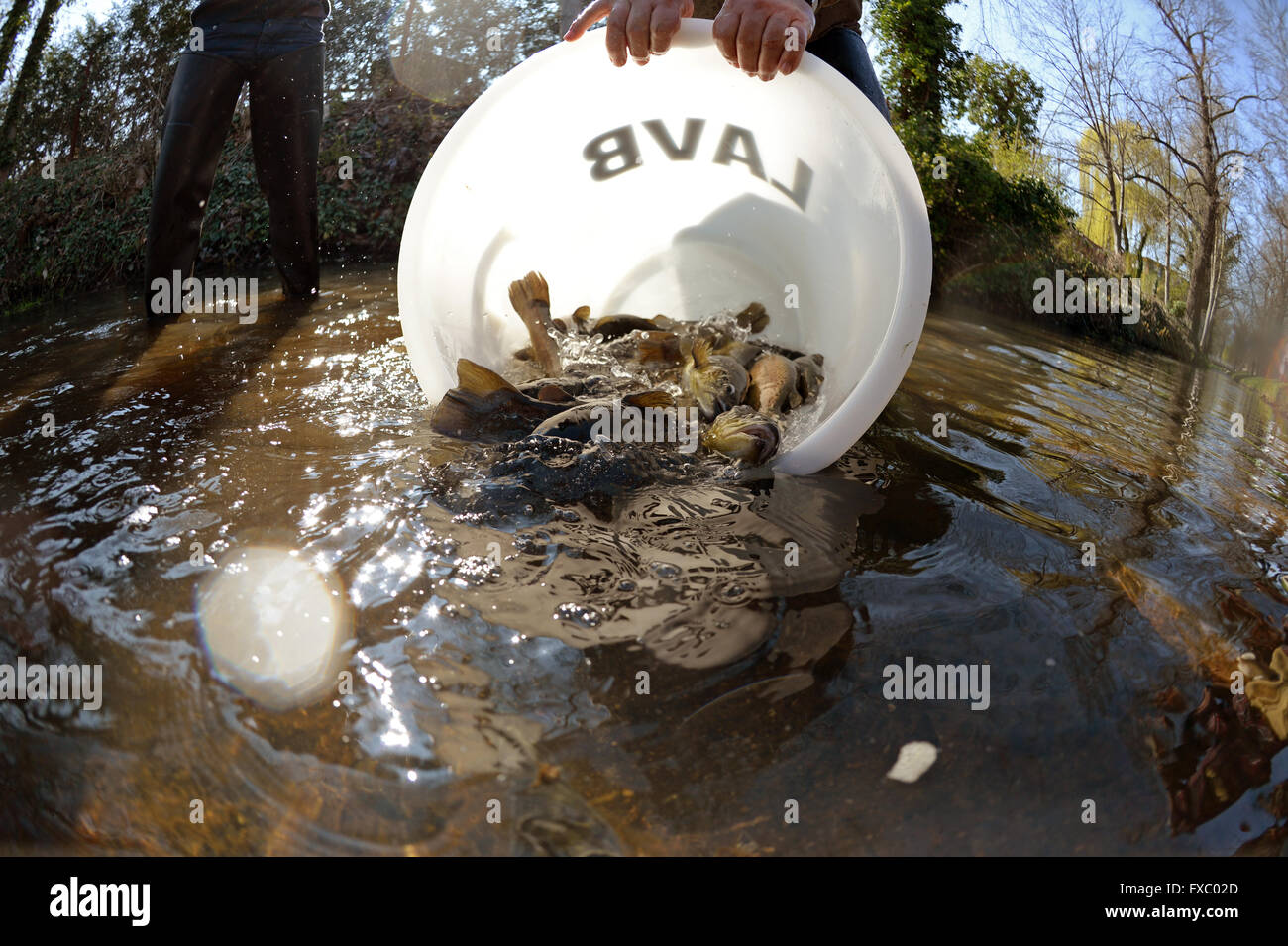 Members of the Brandenburg State Fishing Association release 800 brook trout into the Nuthe river in Luckenwalde, Stock Photo