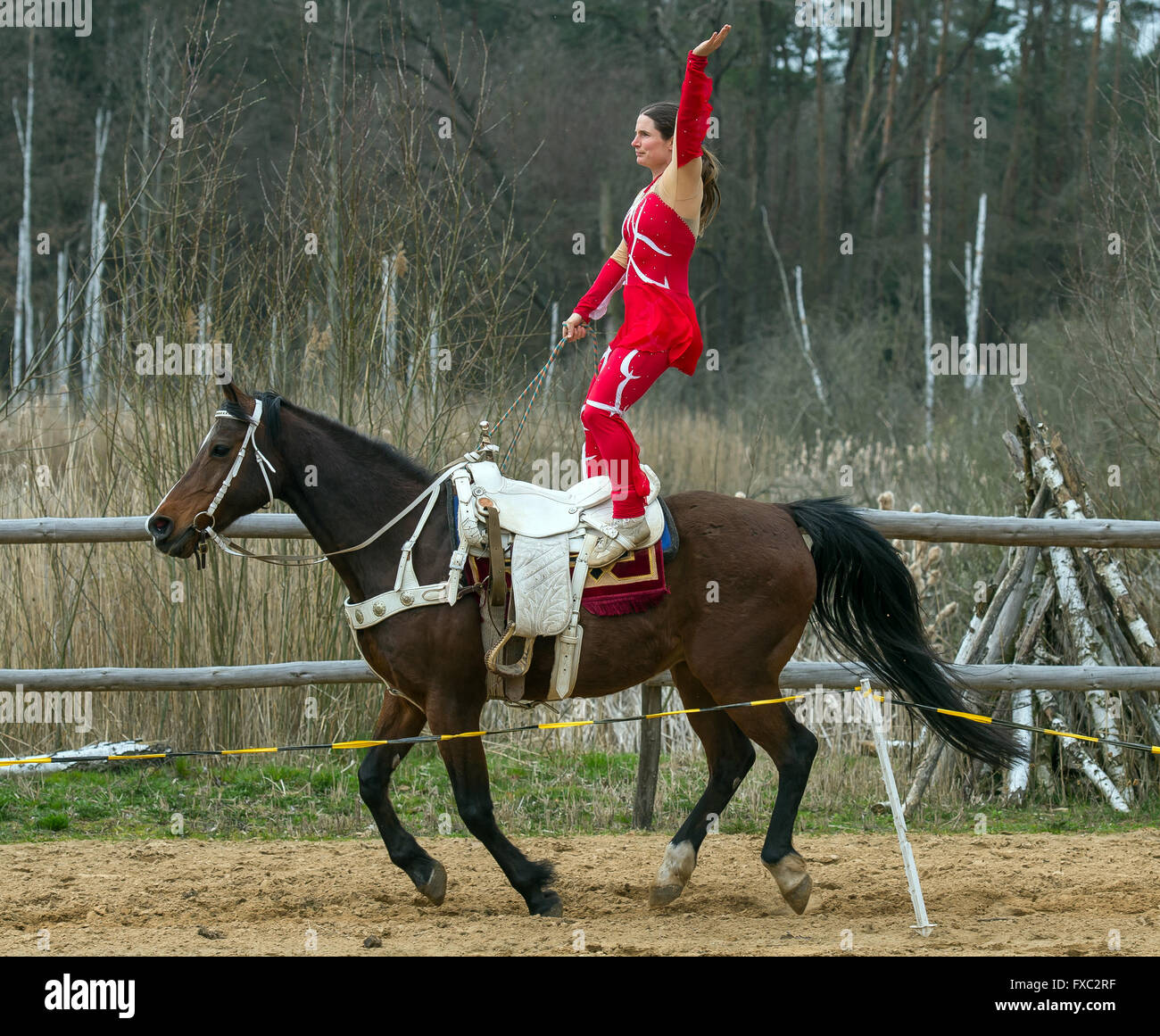 Muencheberg, Germany. 04th Apr, 2016. Stunt rider Daja Ziefuss rides her horse Eden standing up at Sunbow Ranch - Stock Image