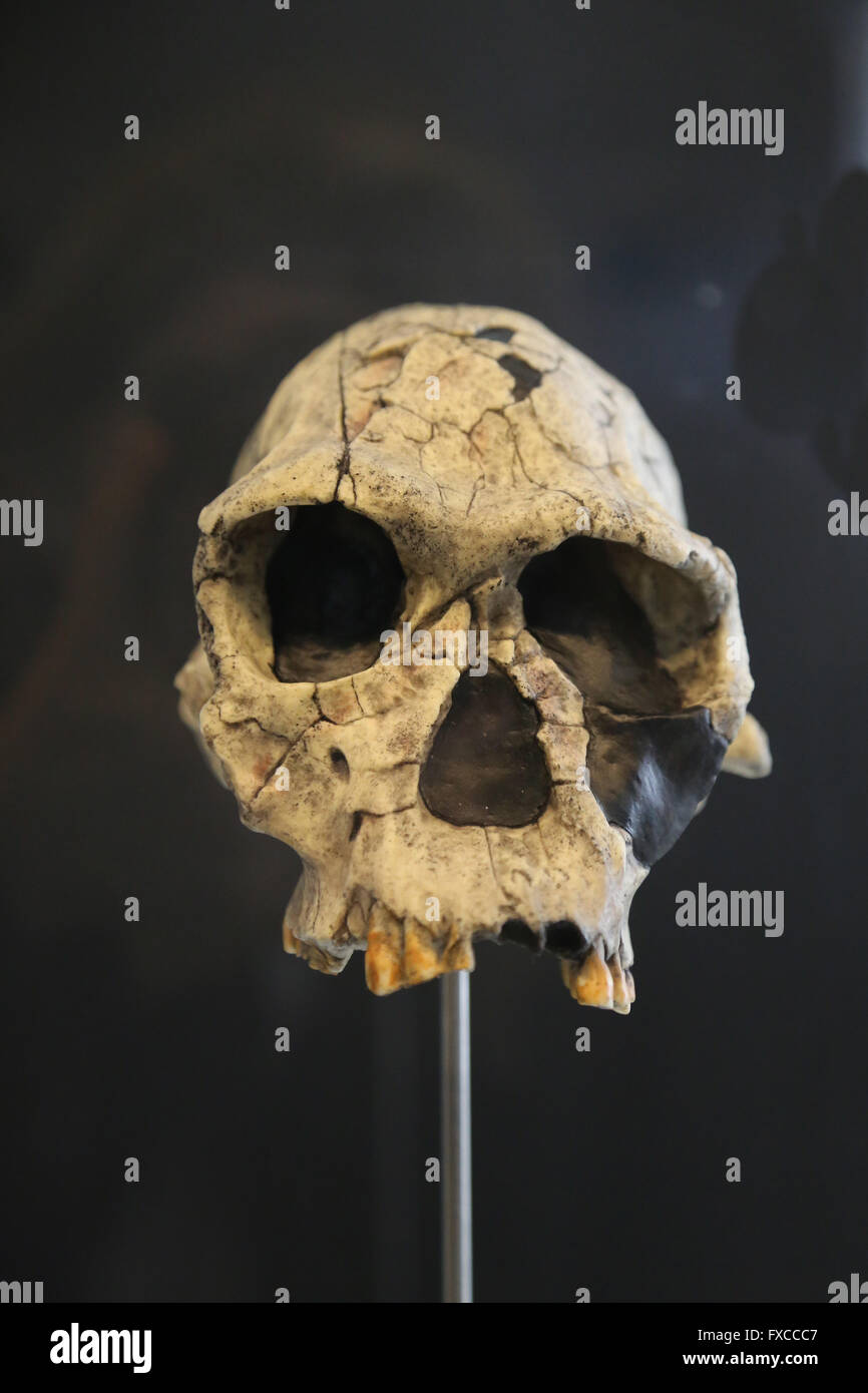 Homo Habilis. Eastern and Southern Africa. -2,3-1.6 millions years ago. Medium Pleistocene. Technology: Mode 1 (Oldowan). - Stock Image