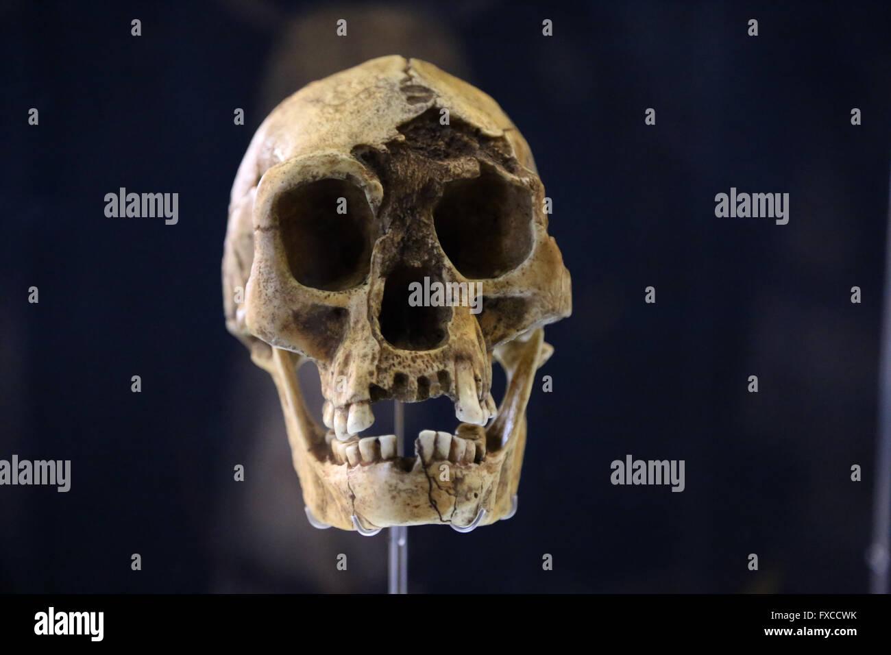 "Homo Floresiensis ""Flores Man"" or ""hobbit"". Island of Flores, Indonesia. -18.000. Pleistocene Brain size: -400 cm3. Stock Photo"