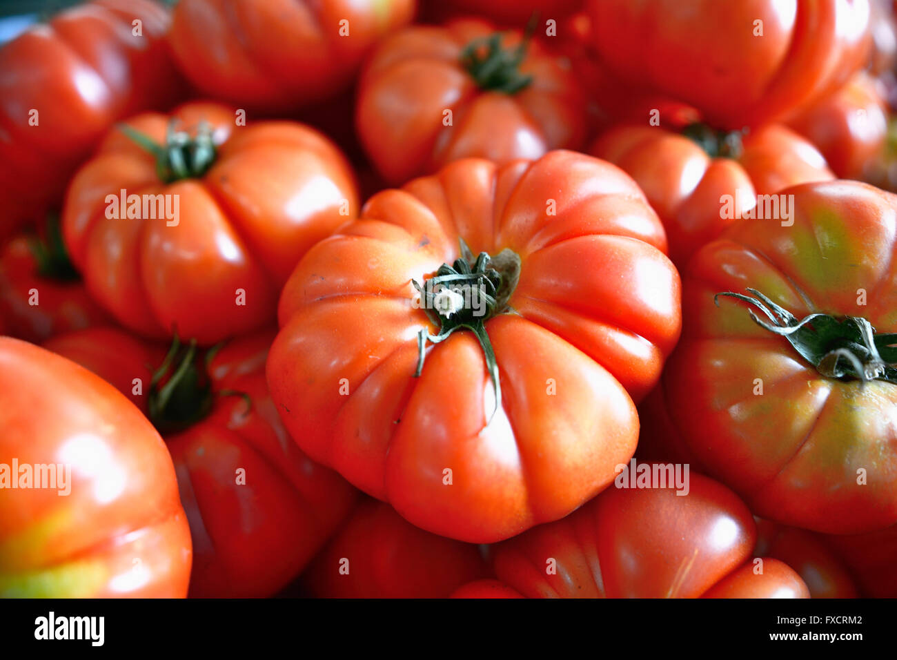 The tomato is the edible, often red berry-type fruit of the nightshade Solanum lycopersicum, commonly known as a - Stock Image