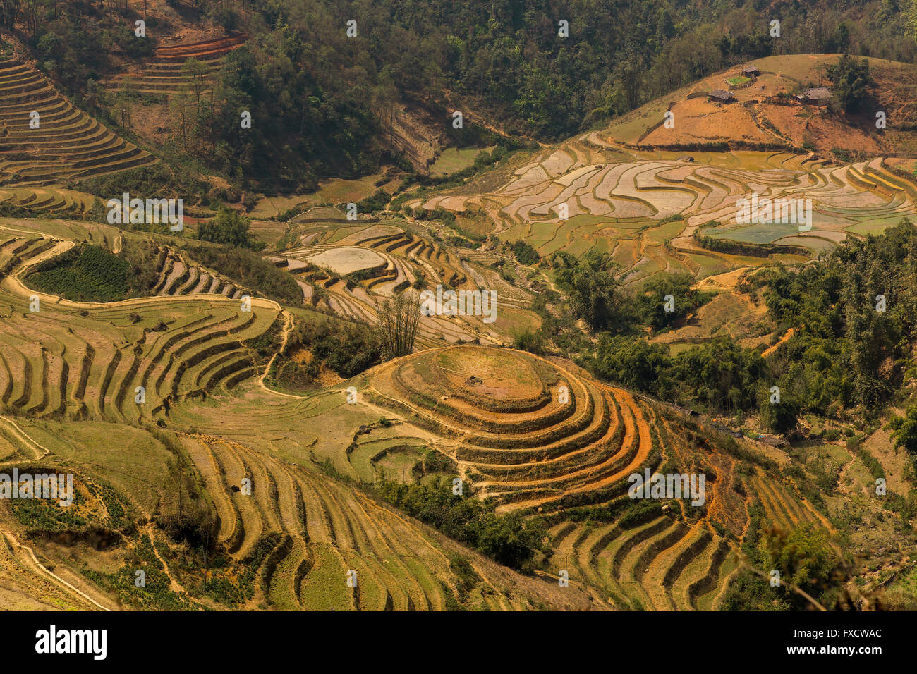 Paddy fields in SaPa - Stock Image