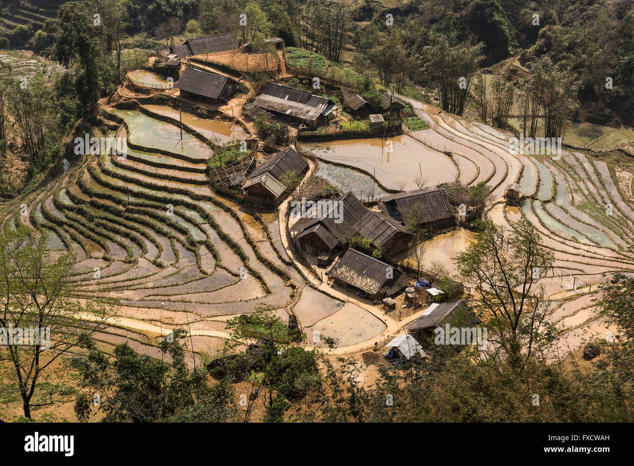 Houses in the middle of rice fields in SaPa - Stock Image