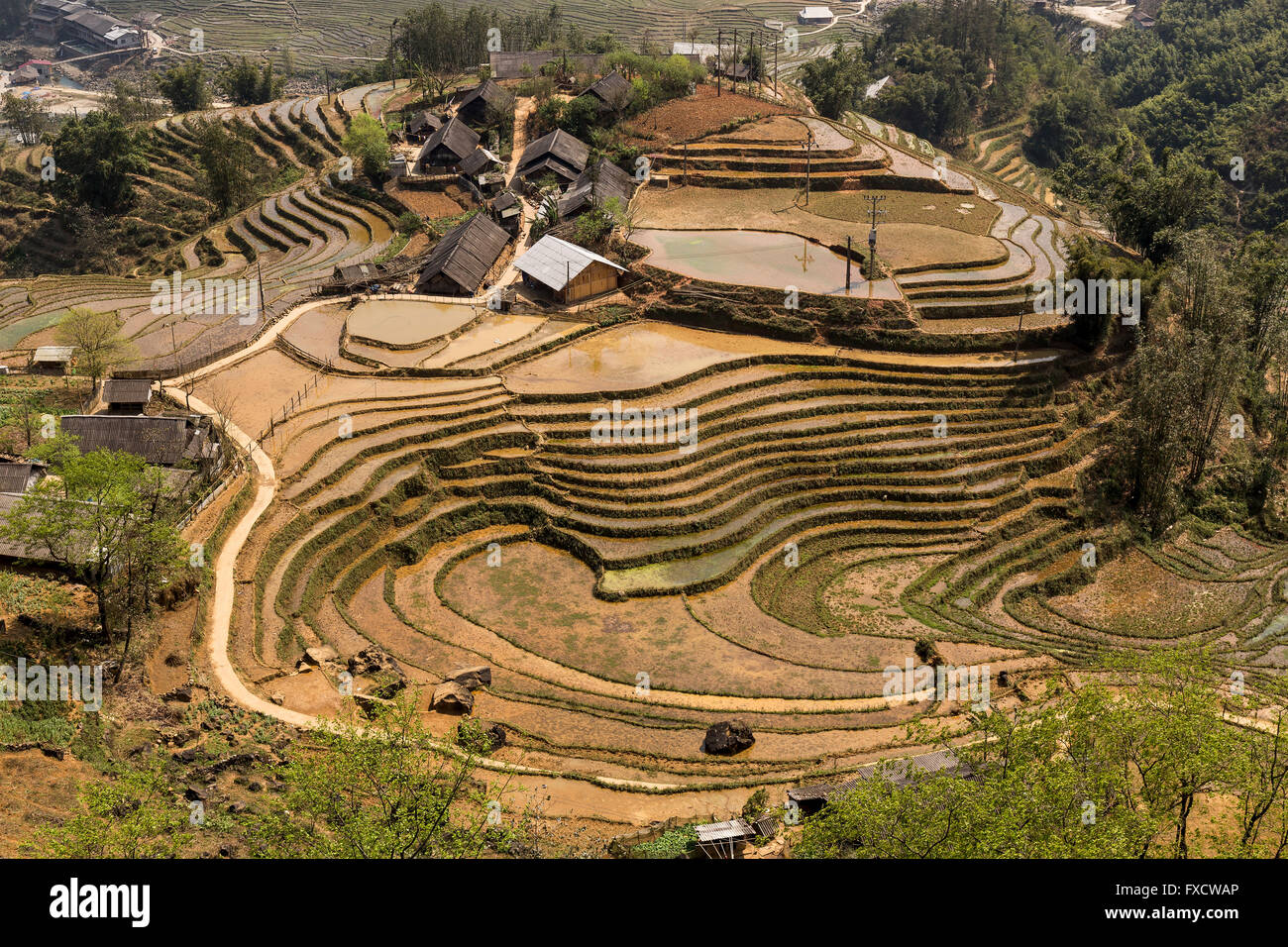 Rice fields in SaPa during Winter - Stock Image