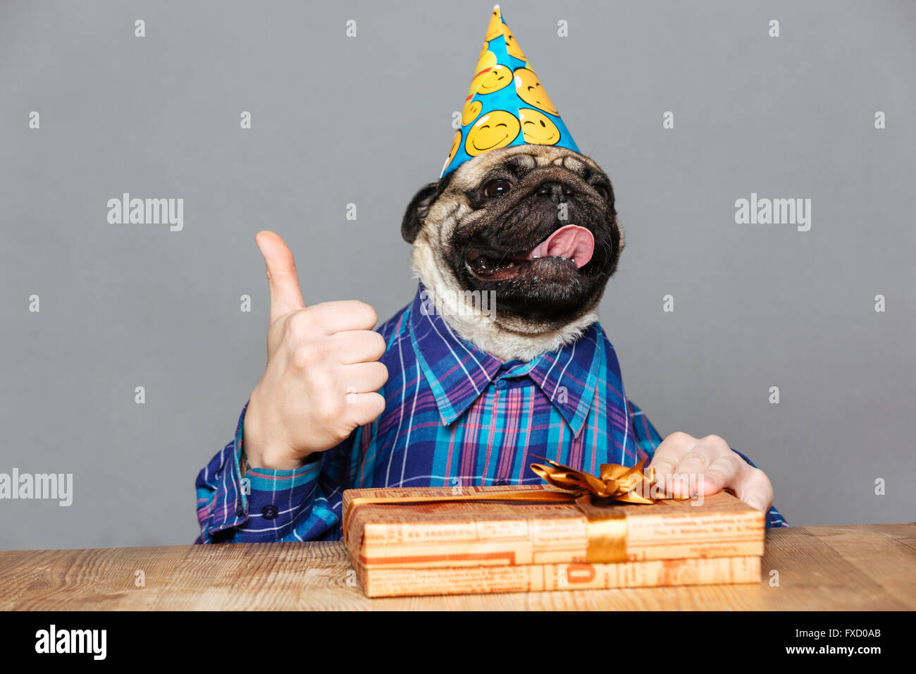 Joyful Pug Dog With Man Hands In Checkered Shirt And Birthday Hat Gift Showing Thumbs Up Over Grey Background