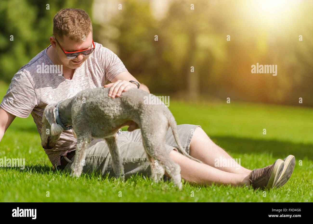 Men Playing with His Bedlington Terrier Dog  in the Park During Summer Day. Dog Man's Best Friend. - Stock Image