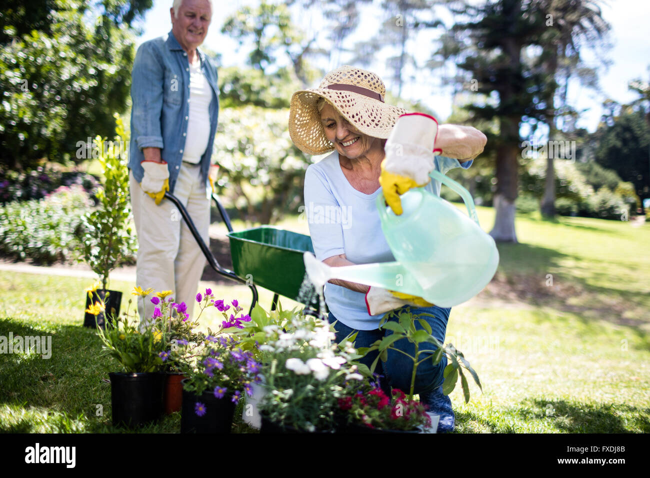 Senior woman watering flower plant in the park - Stock Image