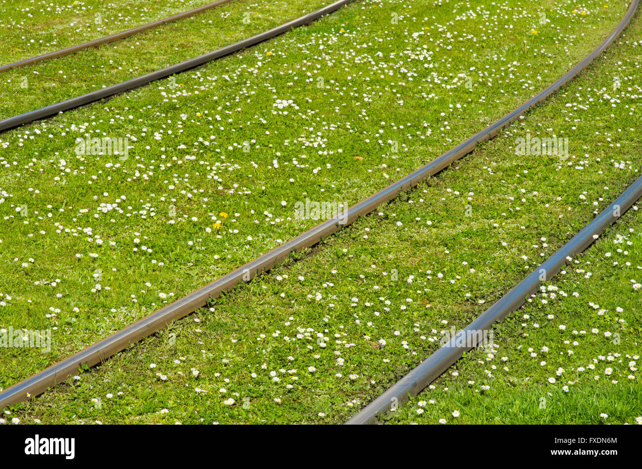Rails on a green meadow with many daisies - Stock Image