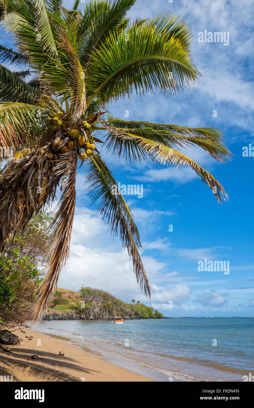 USA, Hawaii, Molokai, palm beach - Stock Image