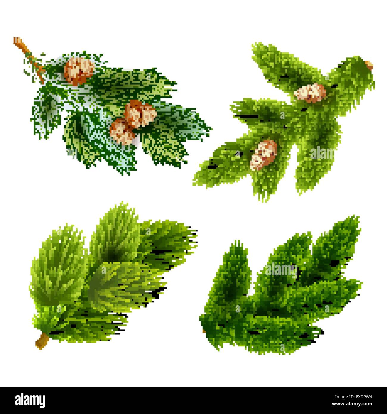 Fir and pine trees branches icons set - Stock Vector
