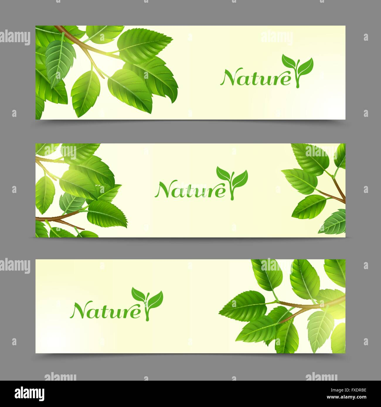 Green Leaves Eco Banners Set Stock Vector Image Art Alamy