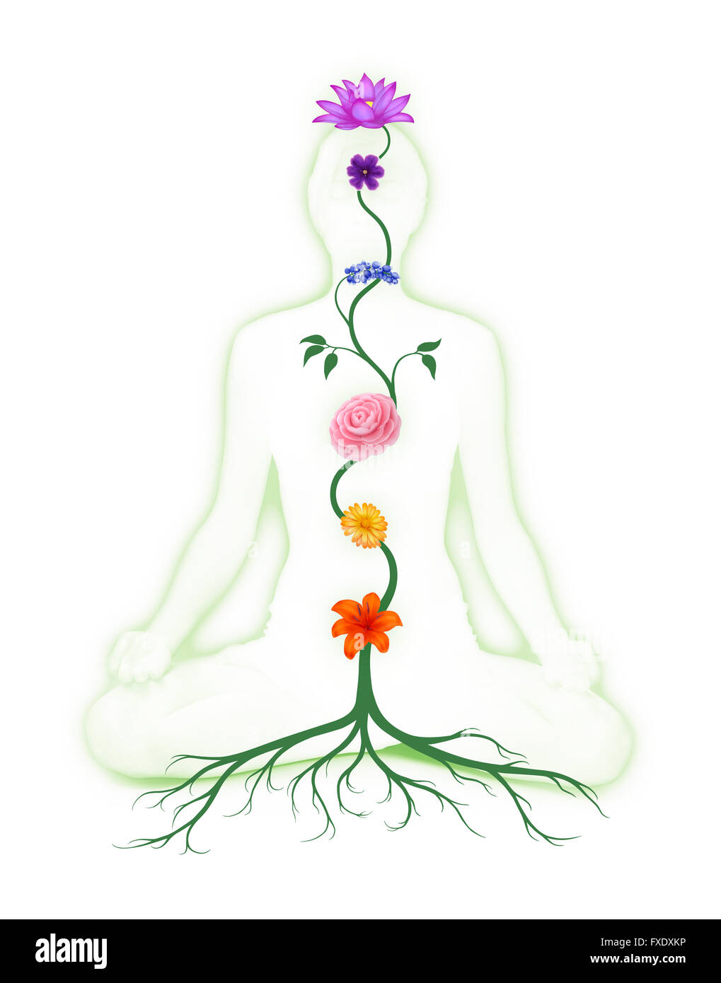 Woman sitting in lotus pose with seven chakra symbols, represented as flowers growing from a root - Stock Image