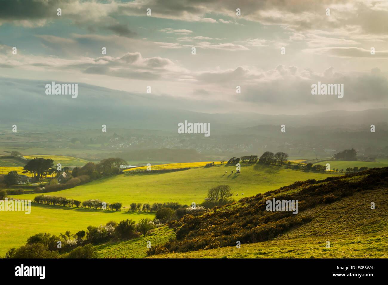 Dorset countryside near Corfe Castle, England. - Stock Image