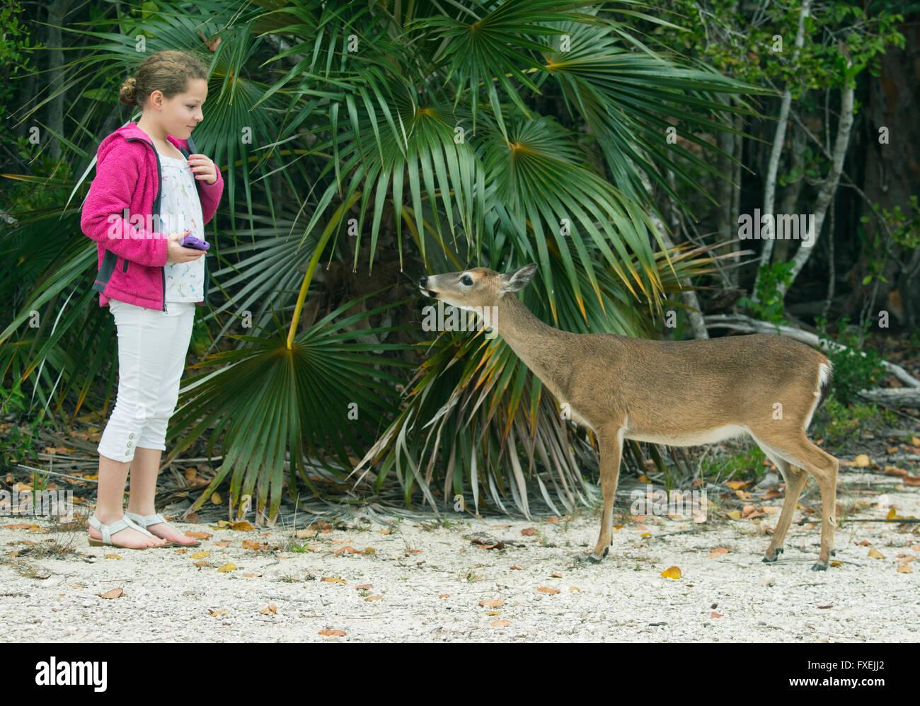Key Deer and 11-year old Maya Braibish, No Name Key, Florida Keys, Florida - Stock Image