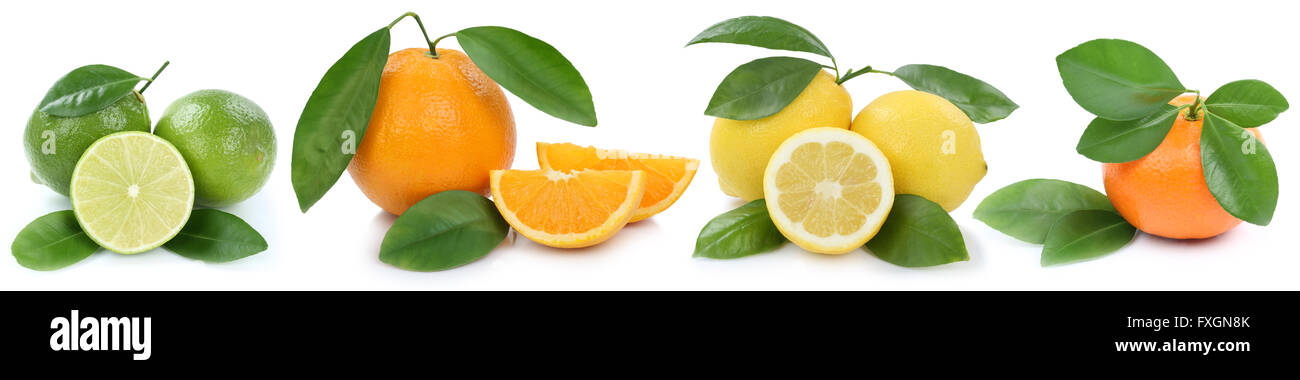 Collection of oranges mandarin lemon organic fruits in a row isolated on a white background - Stock Image