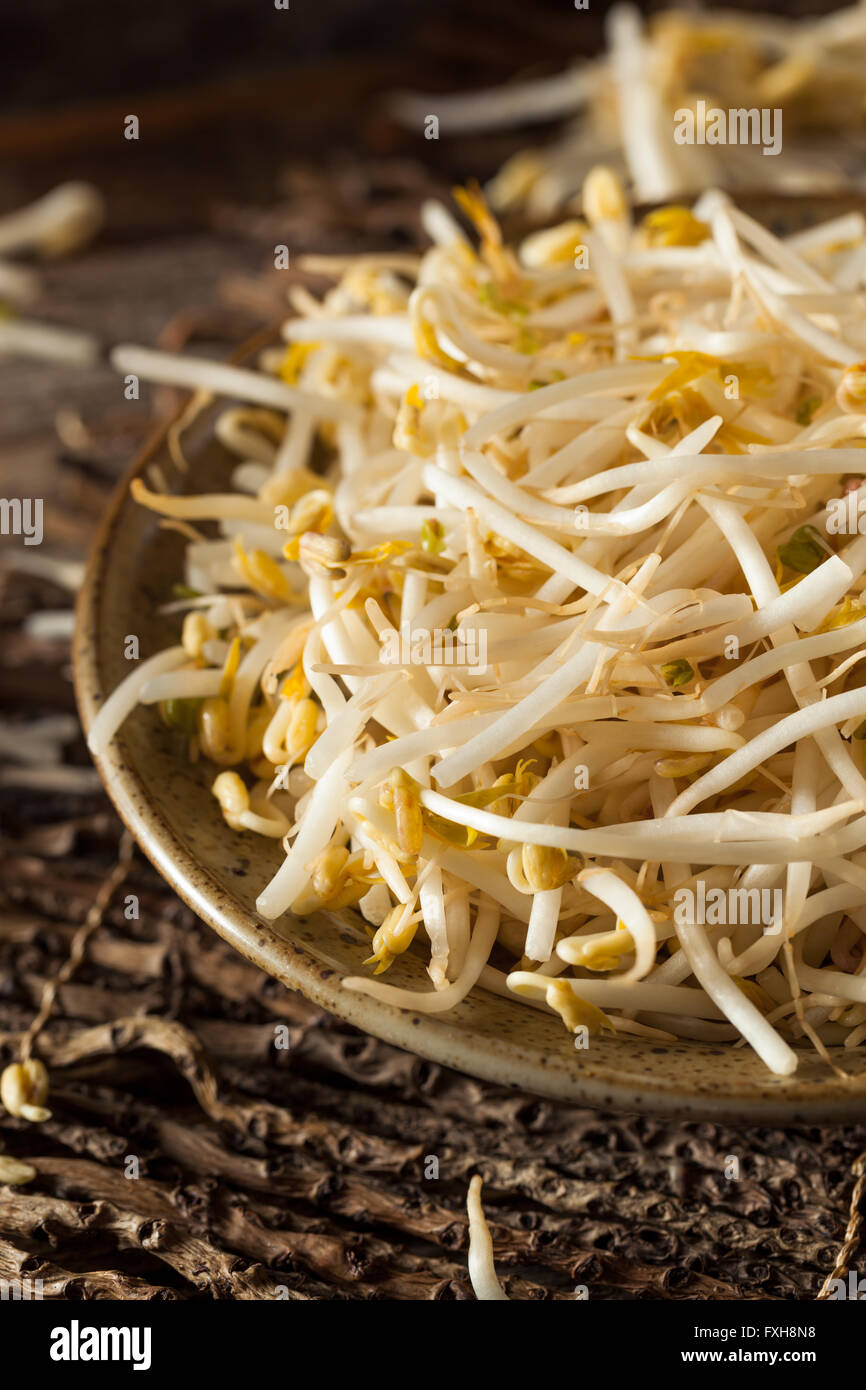 Raw Healthy White Bean Sprouts Ready for Cooking - Stock Image