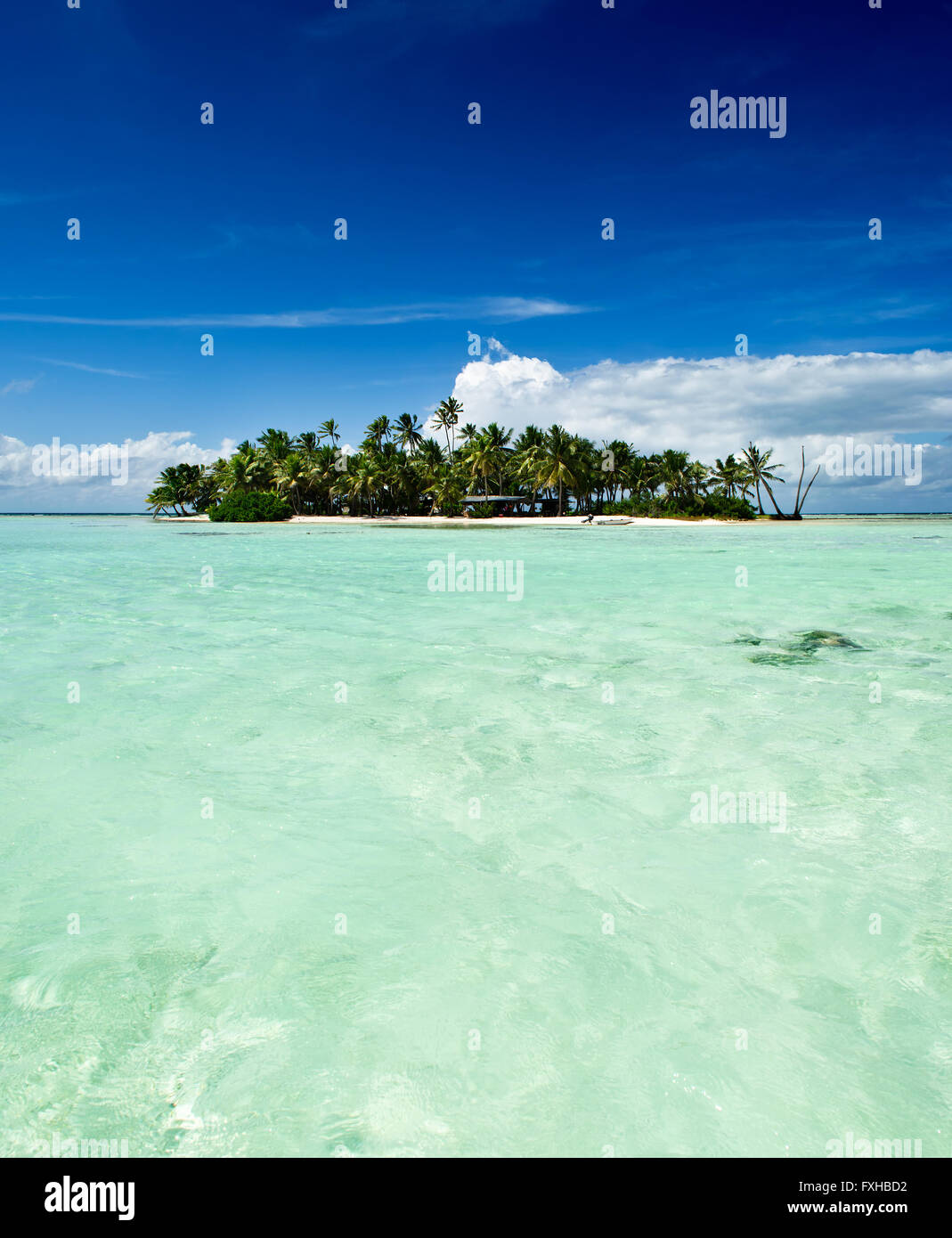 Tropical uninhabited or desert island with beach and palm trees in the Blue Lagoon inside Rangiroa atoll near Tahiti, - Stock Image