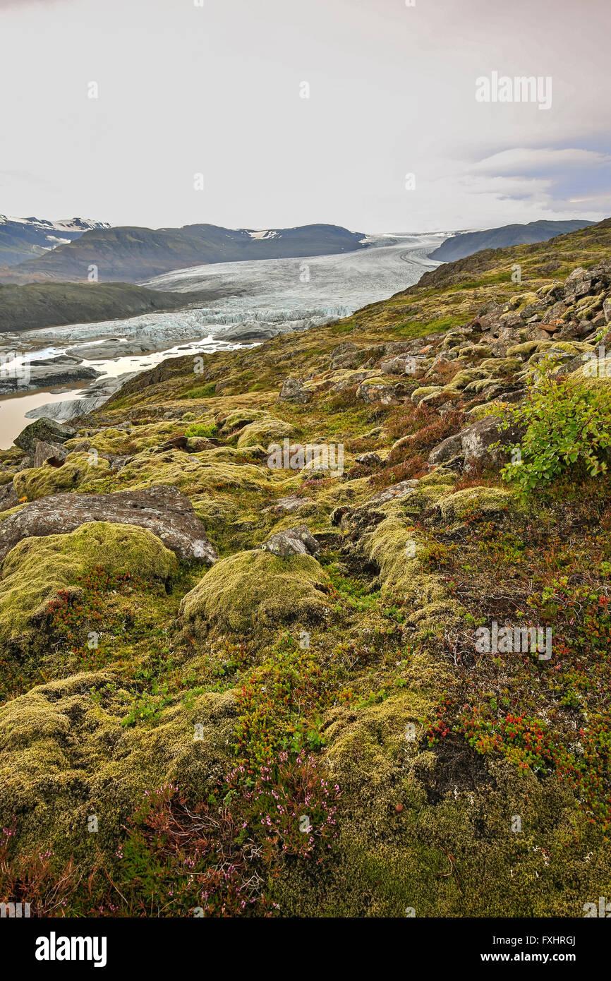 Rocky tundra, glacial lagoon and Hoffellsjokul Glacier, Vatnajokull National Park, Iceland Stock Photo