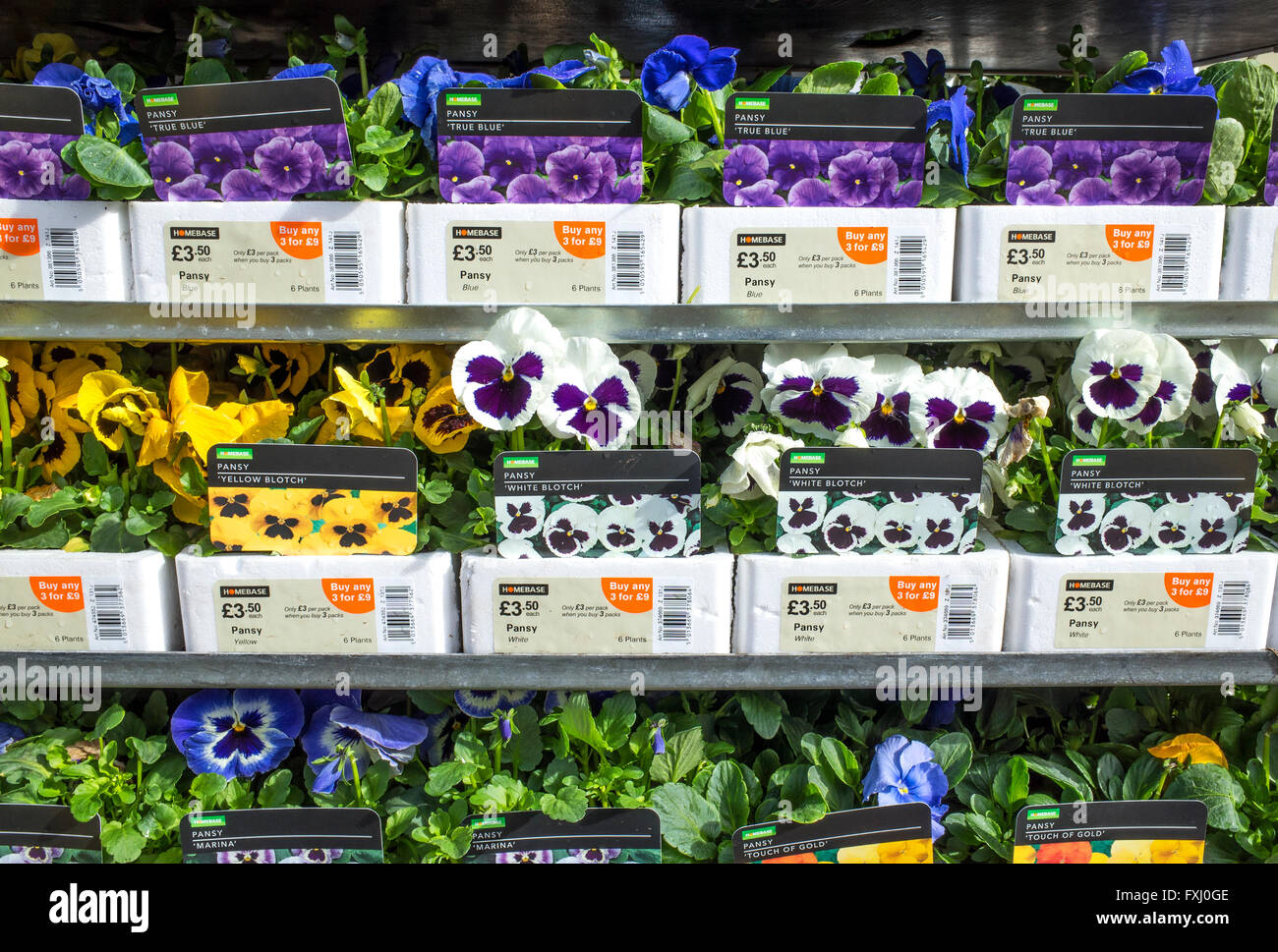 Pansies on sale at a garden centre - Stock Image