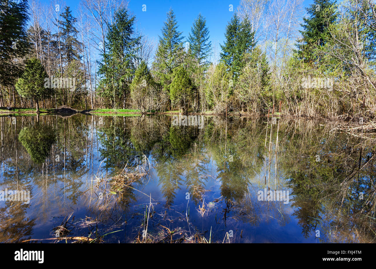 Stormwater retention pond - Stock Image