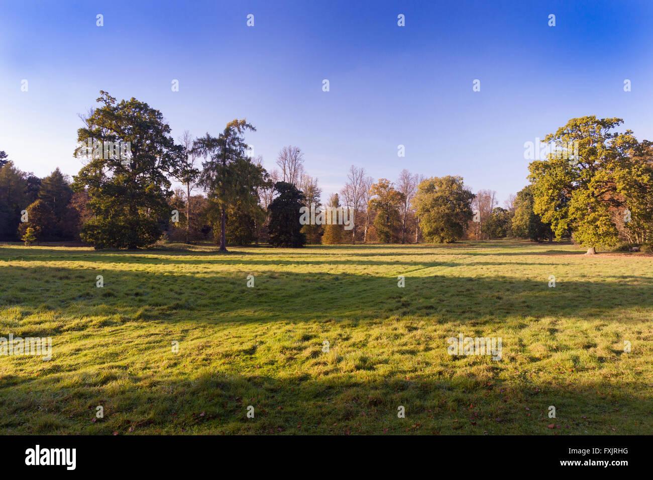 Nowton Park near Bury St Edmunds, Suffolk, UK - Stock Image