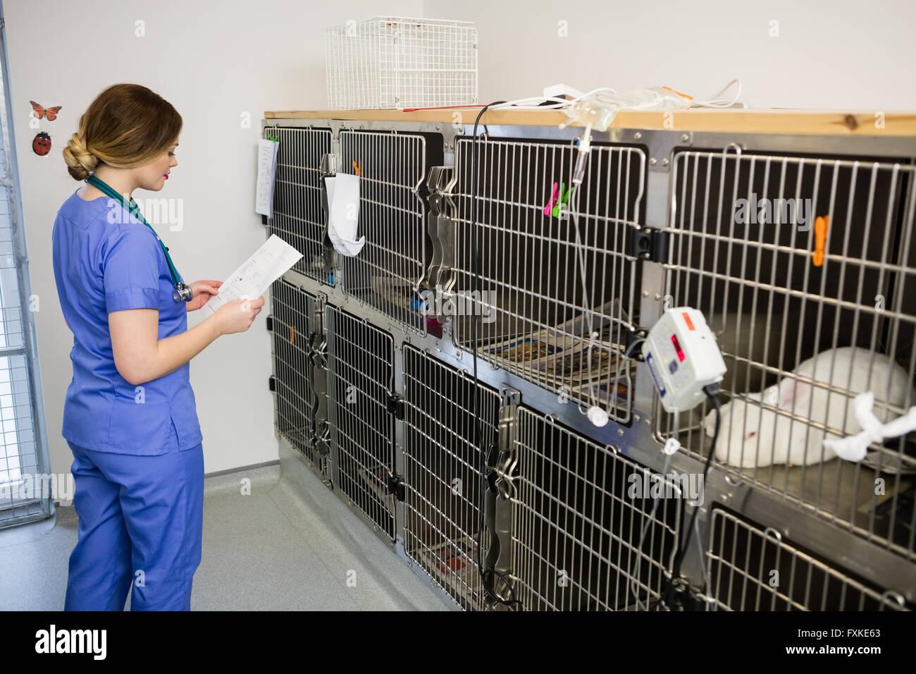 Vet Monitoring Sick Rabbit In Cage Stock Photo 102461131 Alamy